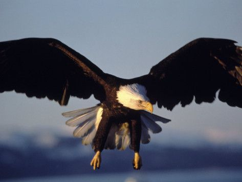 Read Of Rep Ellisons Plan To Enable America To Soar To New Heights