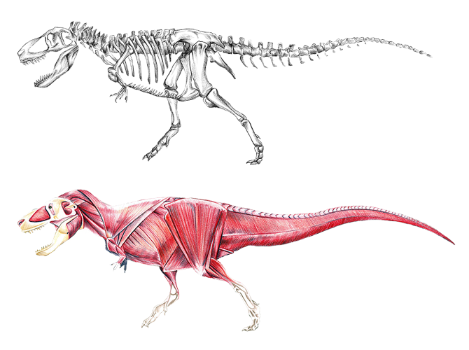 Anatomy Of A Dinosaur - Best Image And Photo High Definition | Dino ...