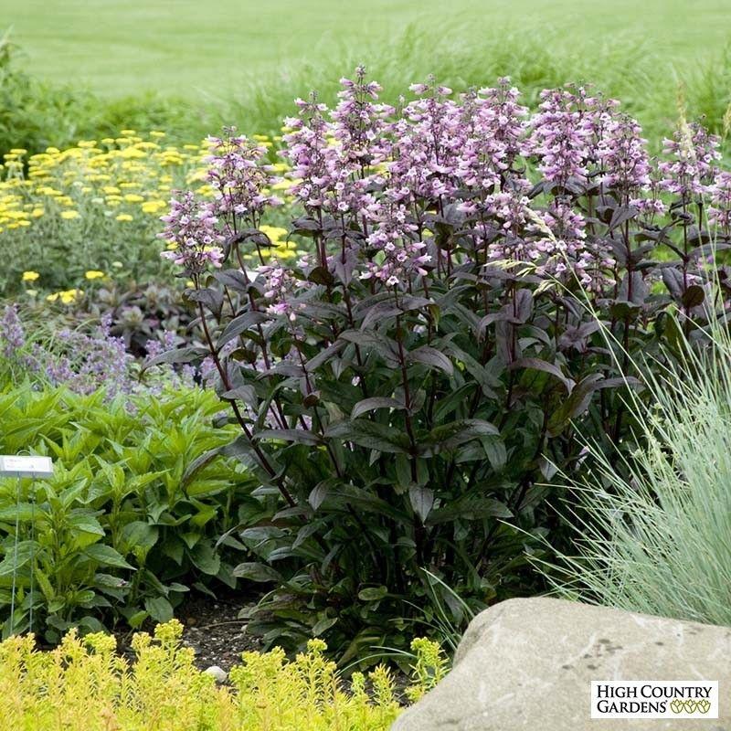 Tower Perennial Gardens: Schoonmaker Landscape