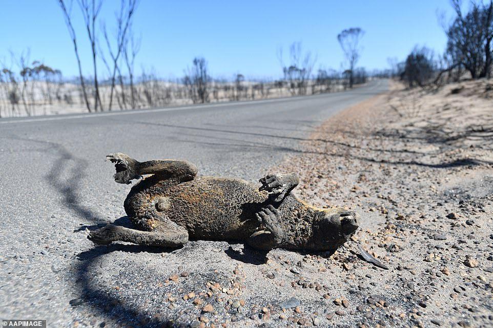The devastating cost of bushfires on Kangaroo Island's