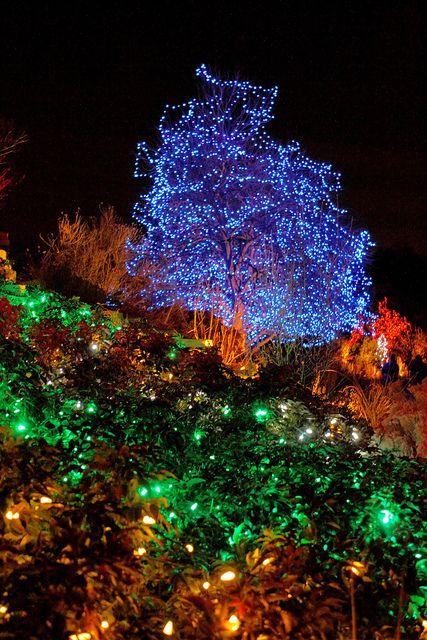 Denver Botanical Garden Christmas Lights | Flickr   Photo Sharing!