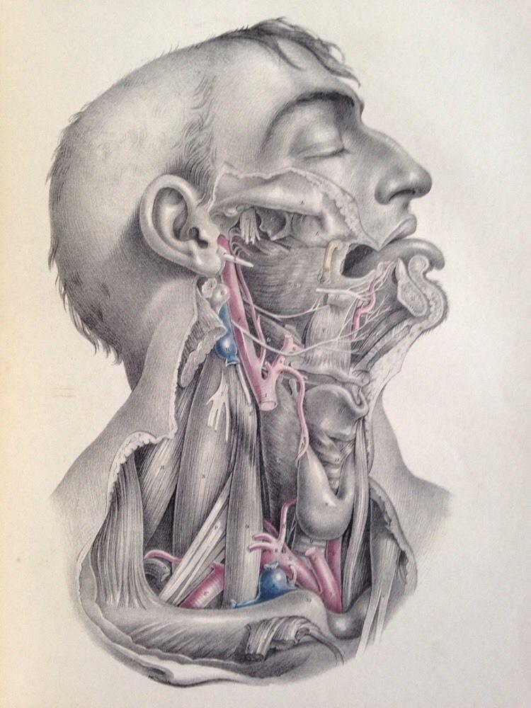 1851 Joseph Maclise Surgical Anatomy 66 Anatomical Plates Medical ...