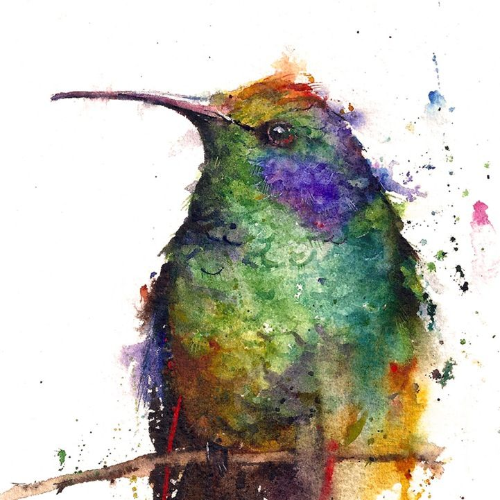 Animal Watercolor Portraits Burst With Color Aquarell Kolibri