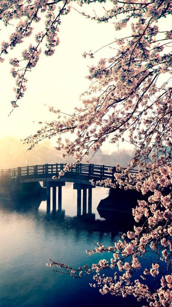 季節を感じる桜 の無料高画質iphone壁紙 07 Nature Wallpaper Spring Wallpaper Nature Pictures