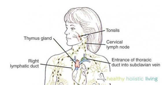 When's the Last Time You Drained Your Lymph Fluids?