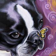 """Lucy"" Boston Terrier"