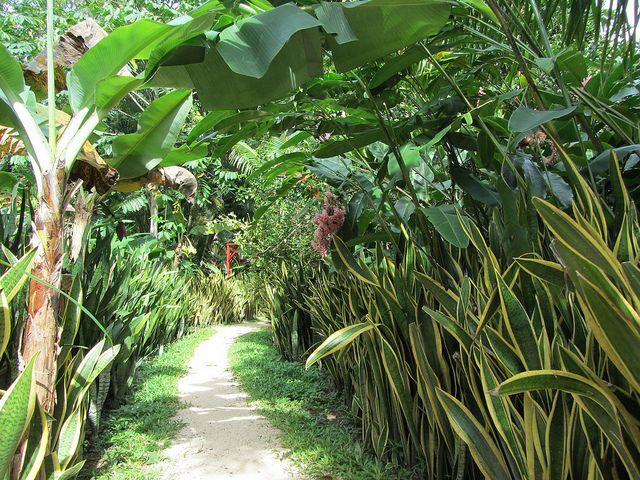 encyclopedia of tropical plants pdf