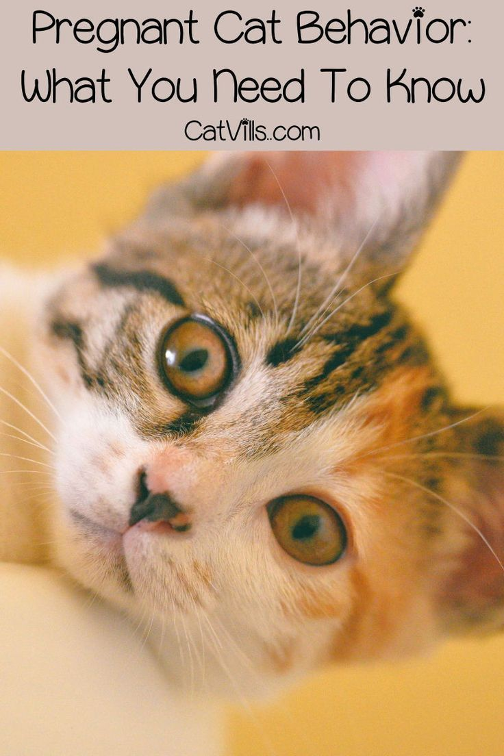 Pin on Cat Health Articles
