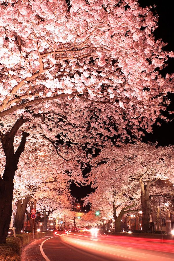 Stunning Long Exposure Shots Of Cherry Blossoms Taken At Night Designtaxi Com Japanese Cherry Blossom Beautiful Places Beautiful World