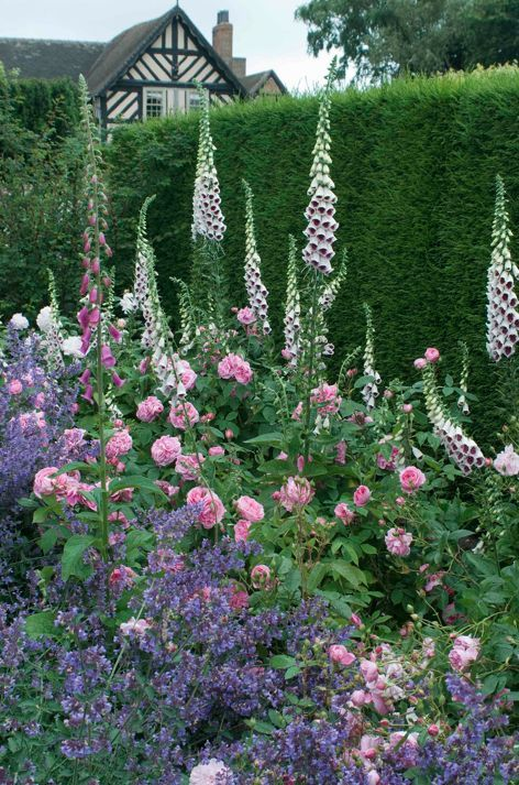 Gertrude Jekyll Bloementuin Google Zoeken Cottage Garden Beautiful Gardens Cottage Garden Design