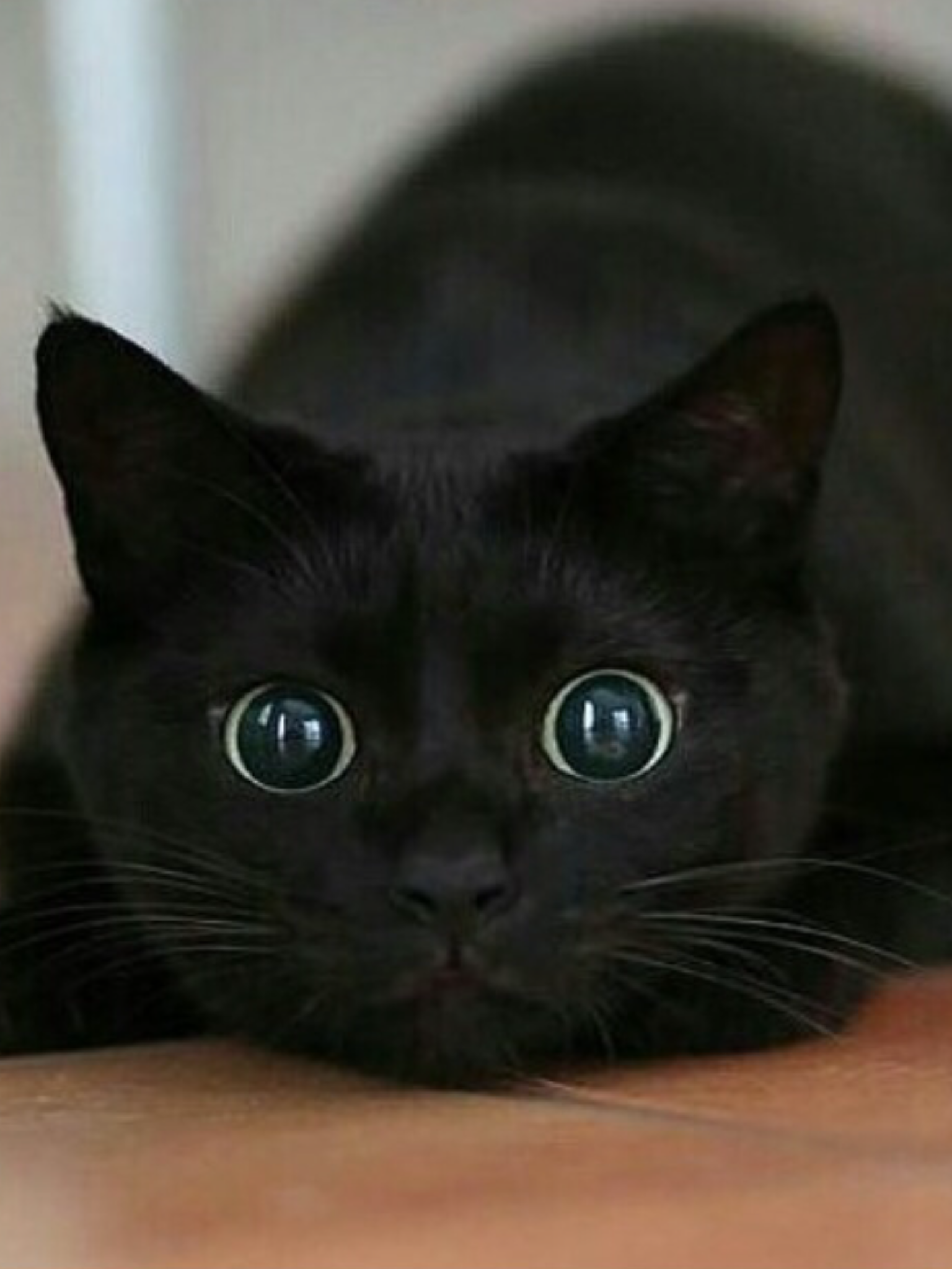 Crazy eyes activated.......IF MY KITTY STARED AT ME LIKE