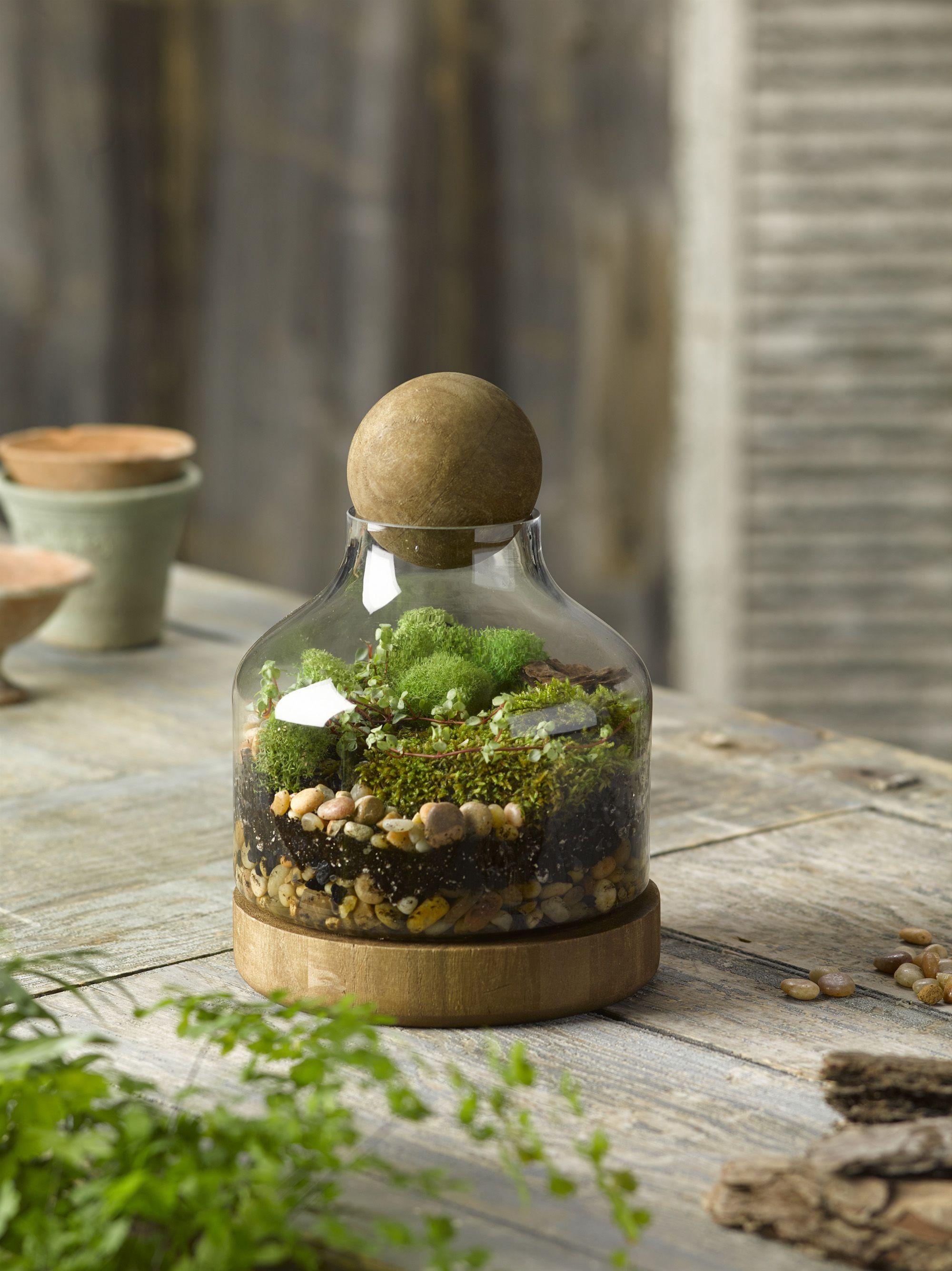 Glass and Wood Terrarium, Small Gardener's Supply 50