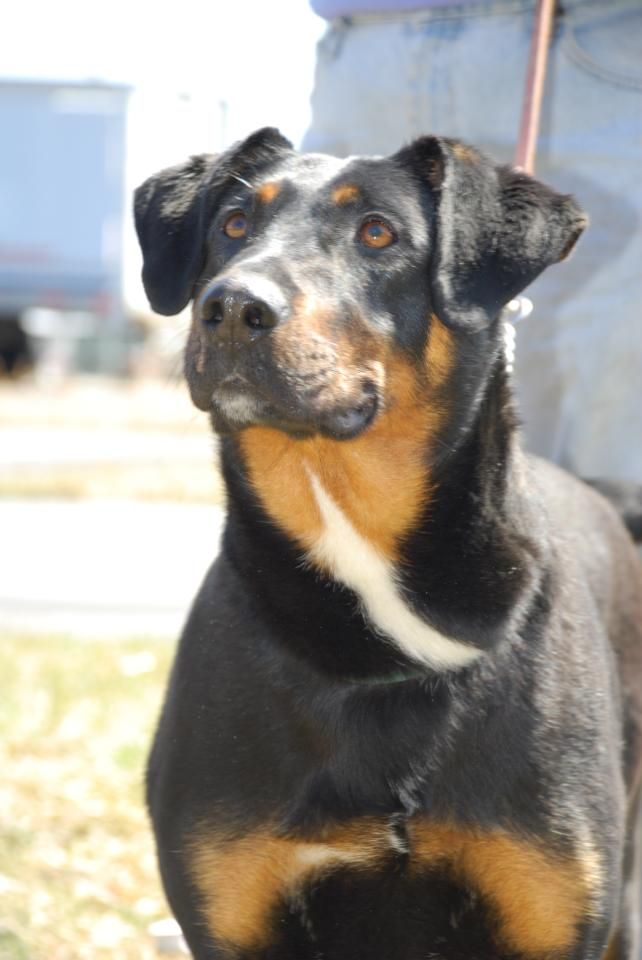 Adopt Kemba On Mutt Dog Doberman Mix Rescue Dogs