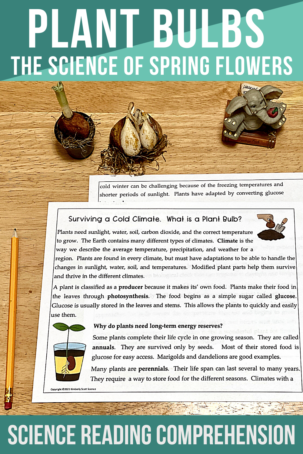 Science Reading Comprehension Plant Bulbs The Science Of Spring Flowers In 2021 Science Reading Comprehension Spring Science Lessons Science Reading [ 1500 x 1000 Pixel ]