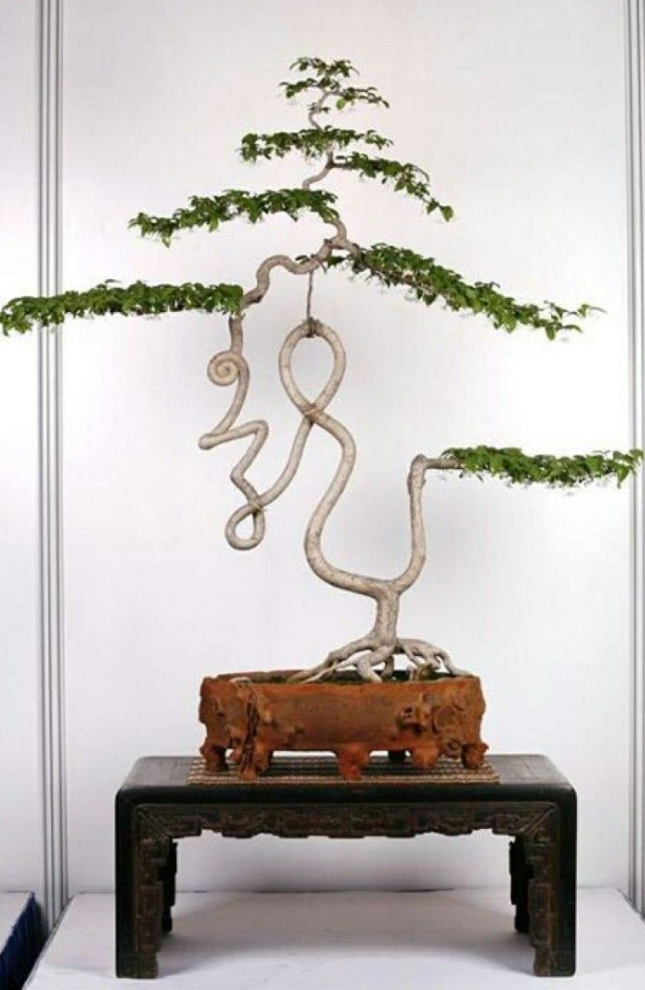 The Result Of Careful Wiring And Pruning Bonsai Pinterest Tips