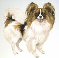 Linda Picken Art Studio - Dog Gallery