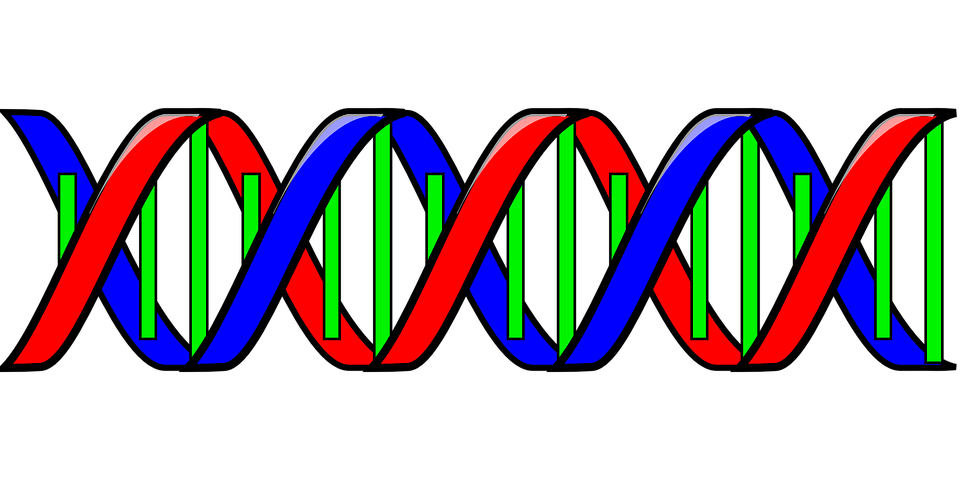Pin On Dna