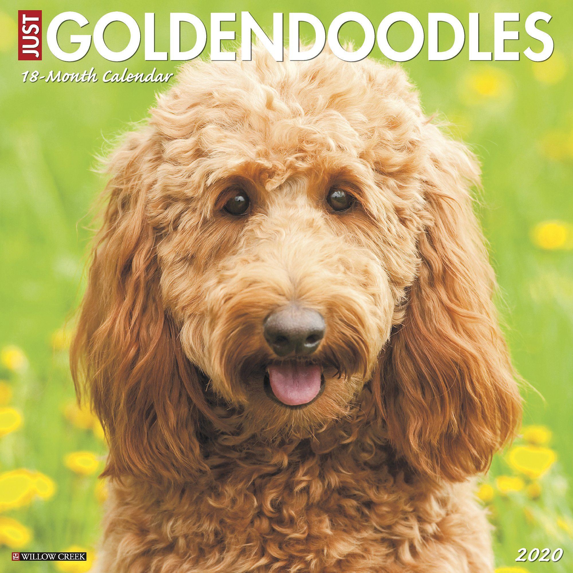 Willow Creek Press Goldendoodles 2020 Wall Calendar Goldendoodle Breeds Wall Calendar