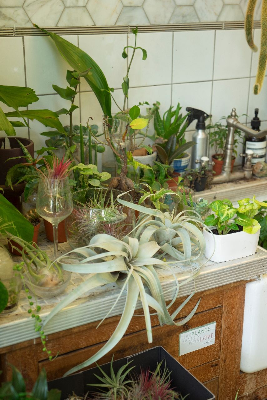 Conservatory Archives in London -   Plants, Creative ...