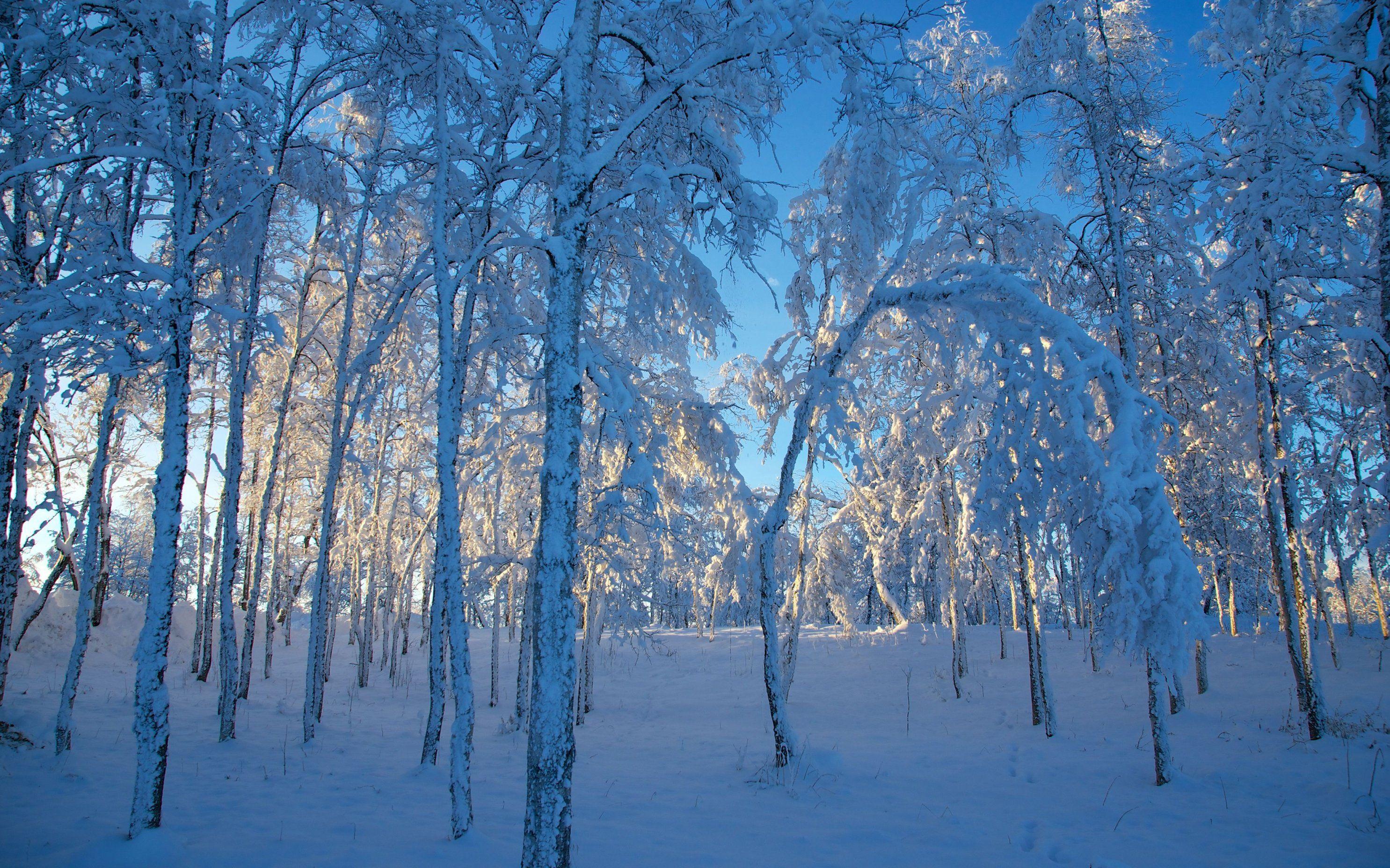 Fondos De Pantalla Paisajes 4k Ultra Hd Winter Wallpaper Desktop Nature Wallpaper Winter Wallpaper