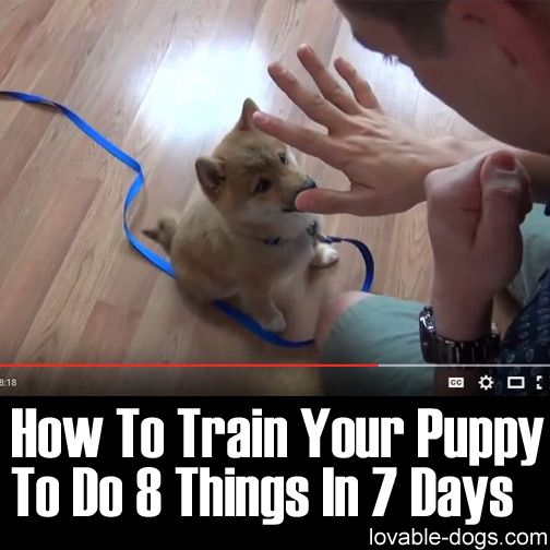 How To Train Your Puppy To Do 8 Things In 7 Days Training Your Puppy Puppy Training Dog Training Obedience