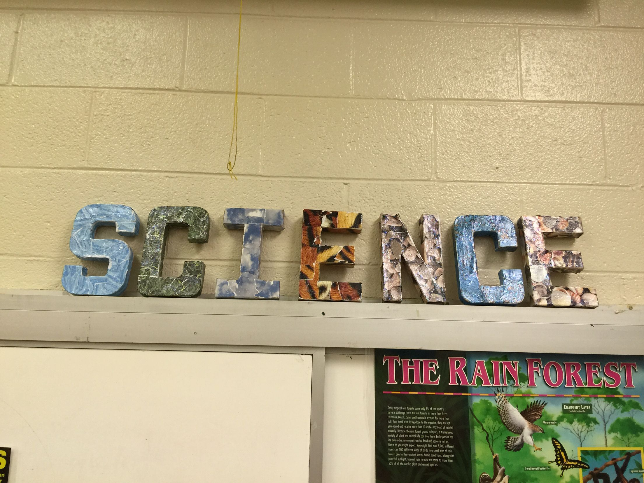 Biology classroom idea Modge podge letters | Biology | Pinterest ...