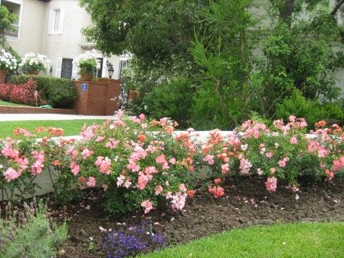 Pictures Of Flower Beds Photos Design For Garden Flower Beds
