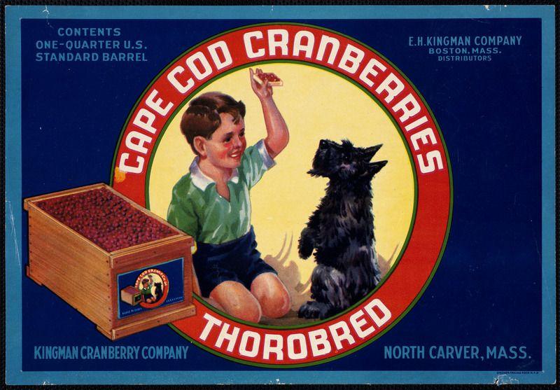 Thorobred Dog Quotes Scottie Dog Scottish Terrier