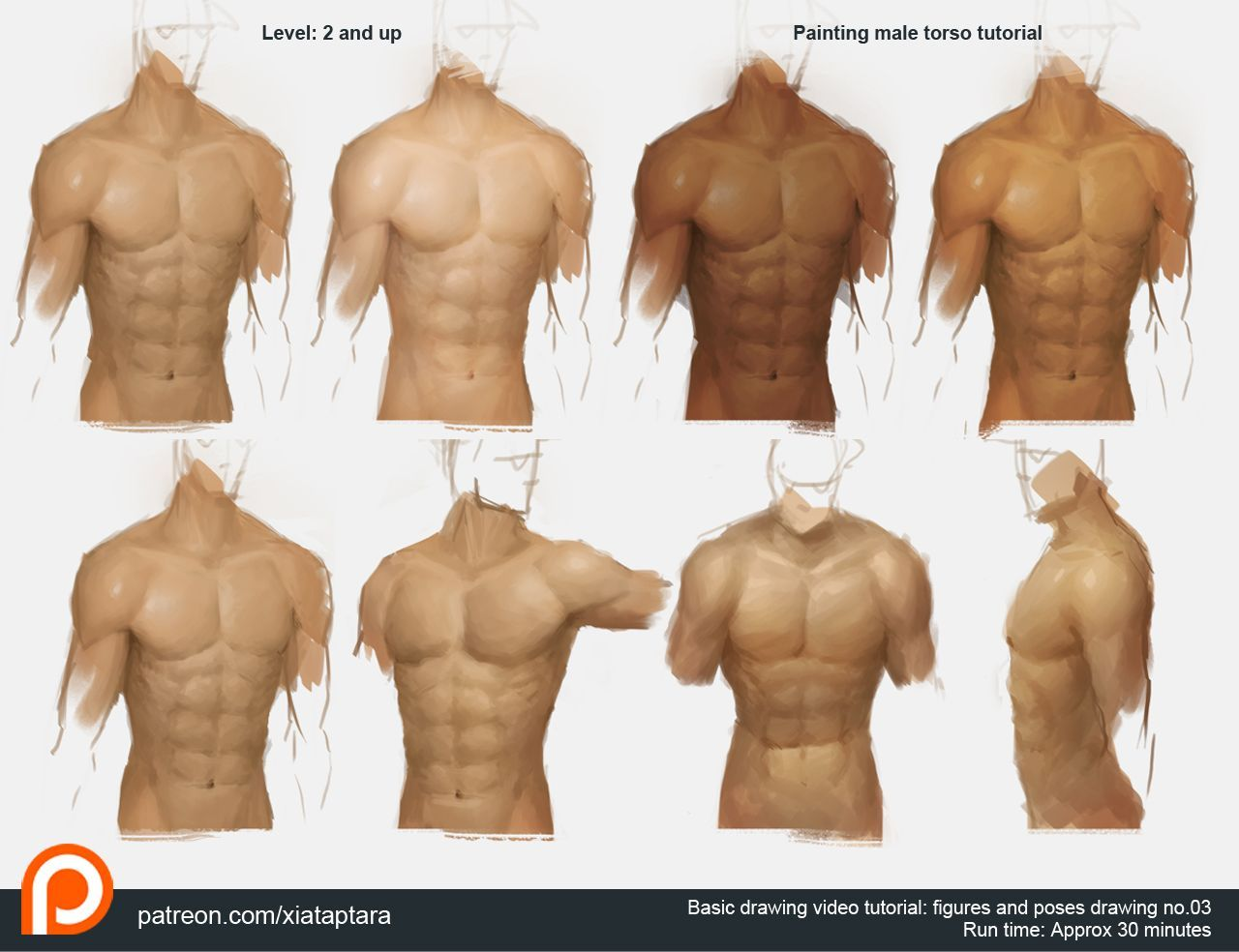 Painting male torso | Male torso, Anatomy and Action poses