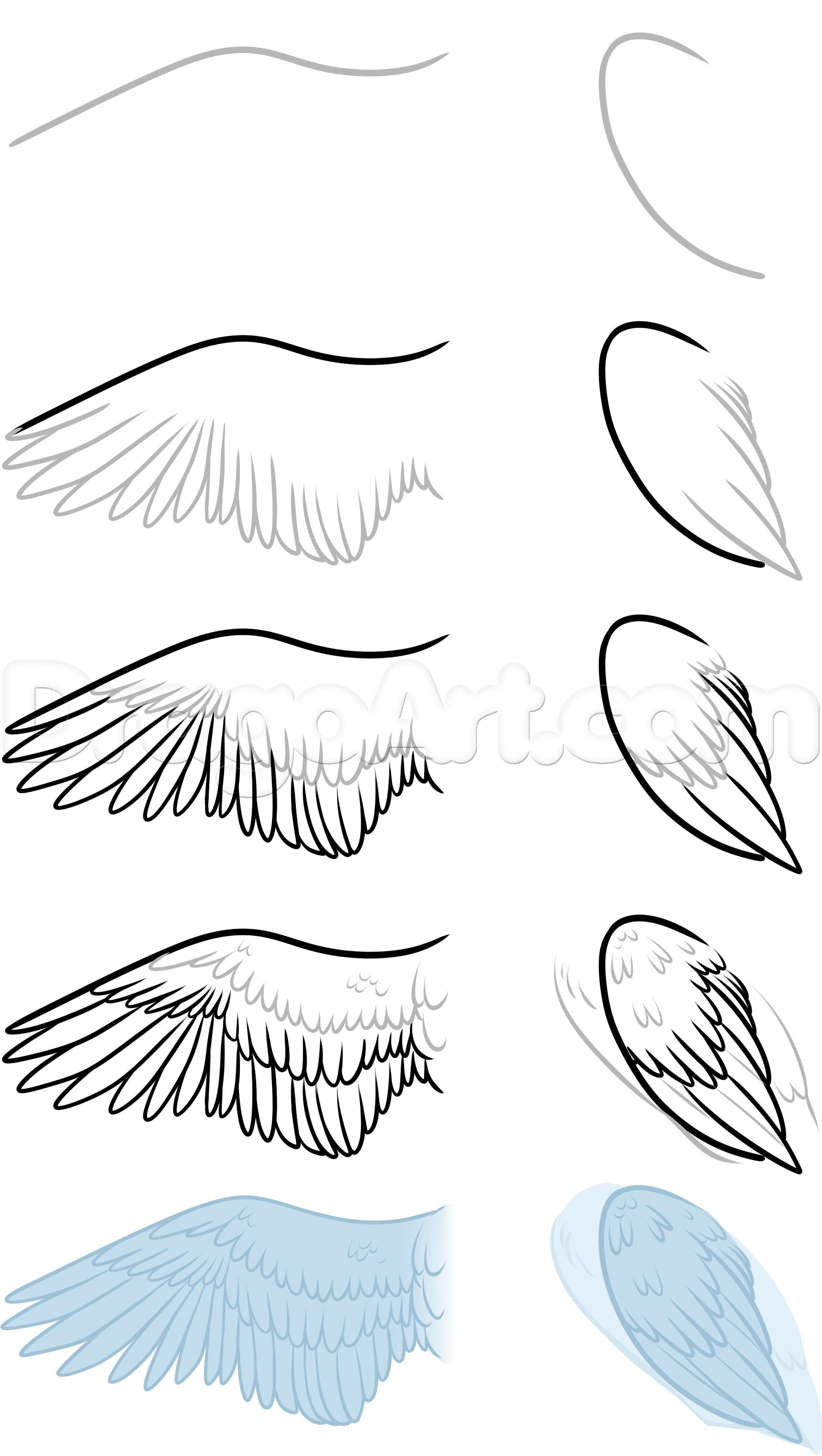 Bird Anatomy Drawing Step 8