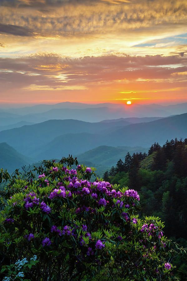 Blue Ridge Parkway Asheville NC Rhododendron Sunset Scenic  by Robert Stephens