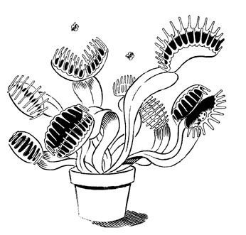 Pin On Gruesome Illustrated Letter Venus Fly Trap Illustrations Research