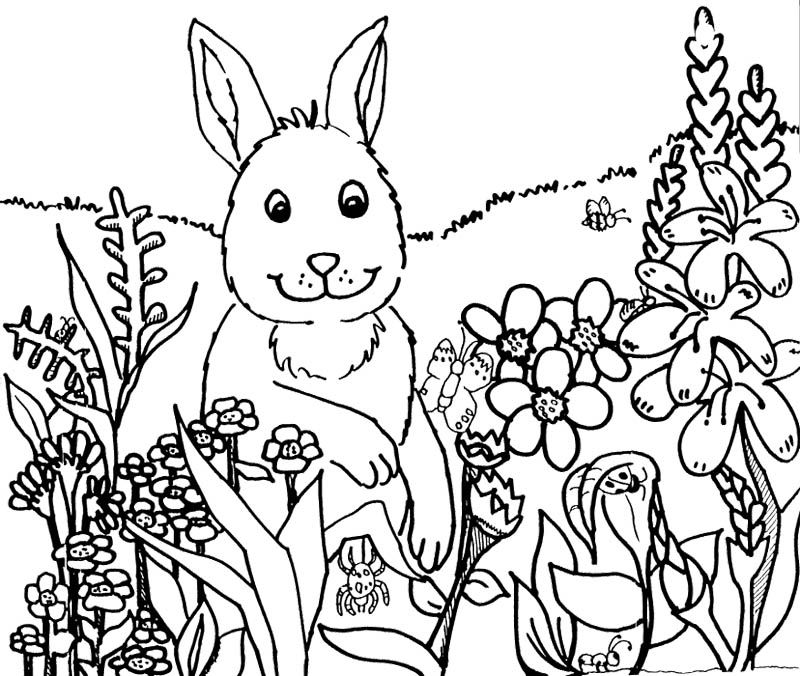 Rabbit Happy Spring Flower Coloring Pages | Kids Coloring Pages ...
