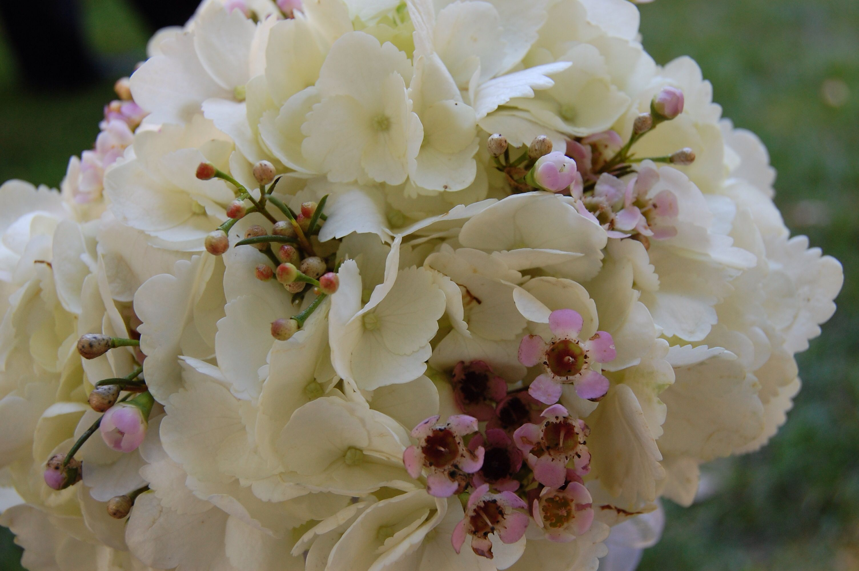 Gorgeous white hydrangeas and pink wax flower . See more at www.freshnfabulousflowers.com