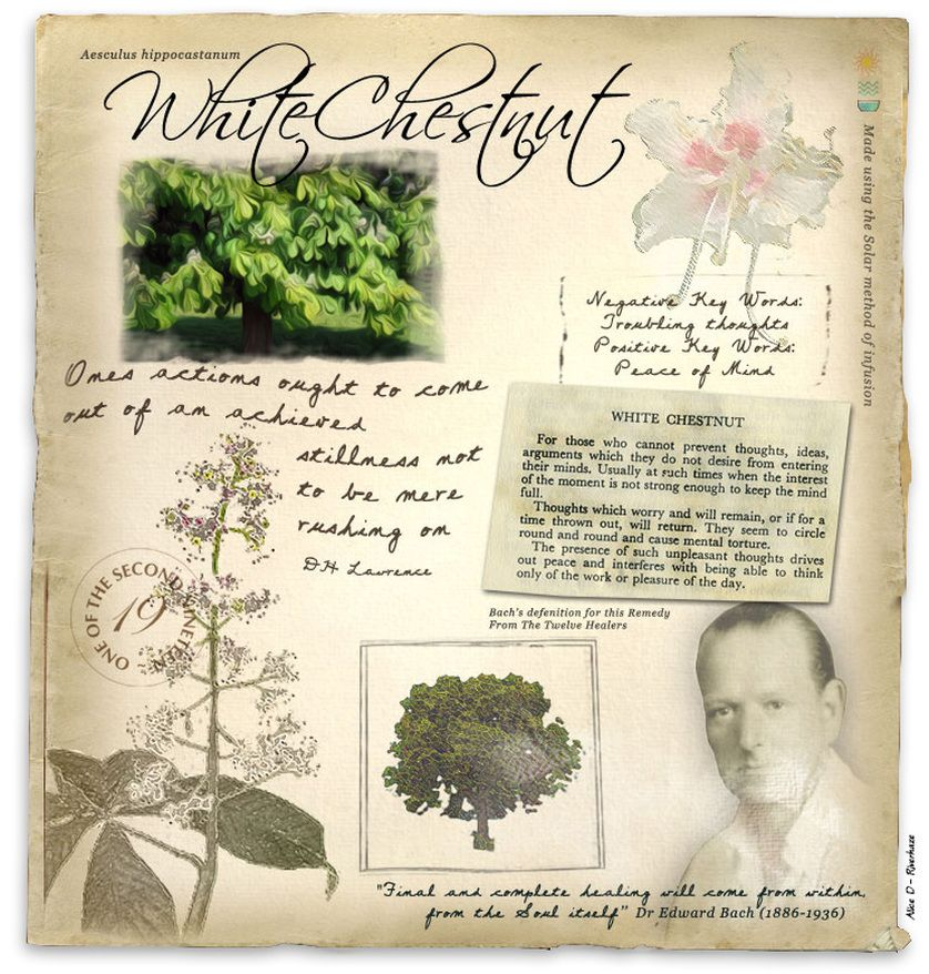 White chestnut bach flowers pinterest white chestnut remedies white chestnut bach flower remedy for incessant intrusive and troubling thoughts mightylinksfo