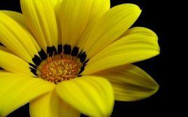 Wallpapers Hd Great Yellow Flower Fleurs Pinterest Fleur