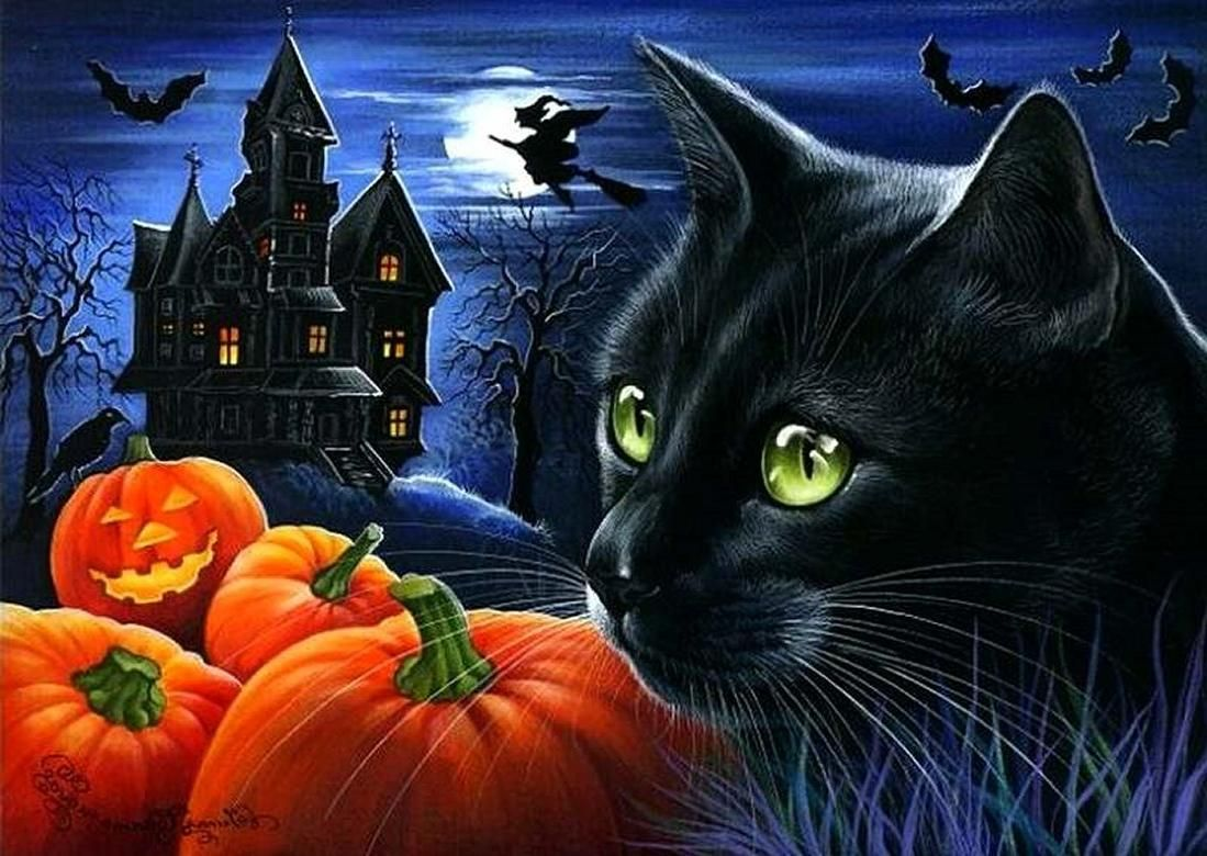 halloween cats and pumpkins | Black cat halloween pumpkin night ...