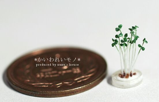 2011/06/22//Wed. *貝割れ大根*