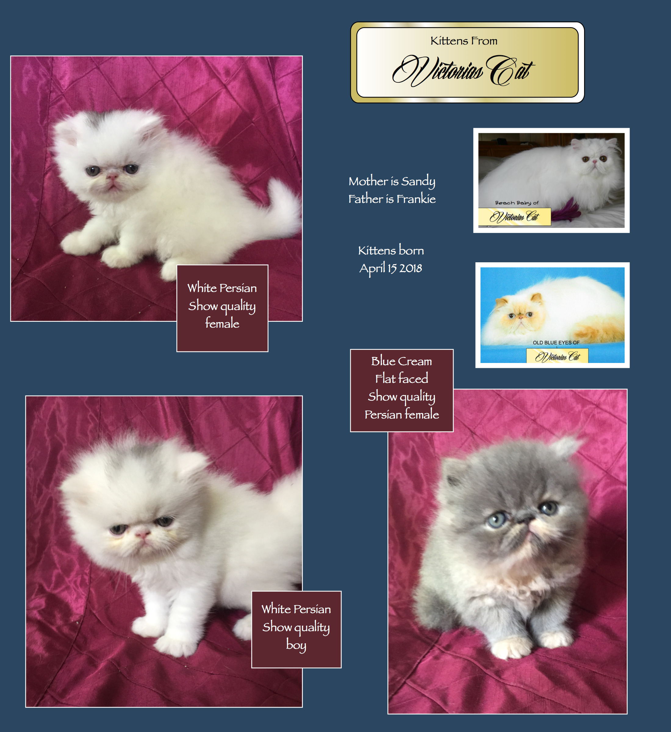 Sandy Has 3 Kittens Available May 2018 Beautiful Cats Kittens Cats