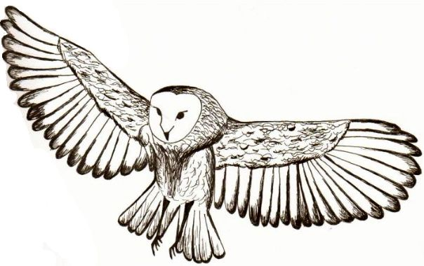 Owl in Flight by mandah pandahdeviantartcom on deviantART Real