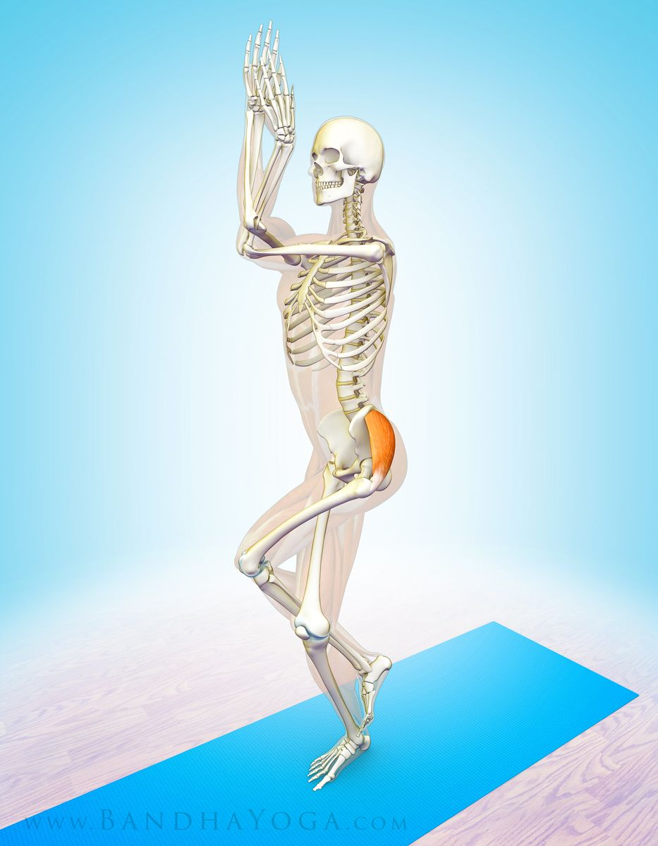 The Daily Bandha: The Gluteus Medius Muscle in Yoga | 해부학 ...