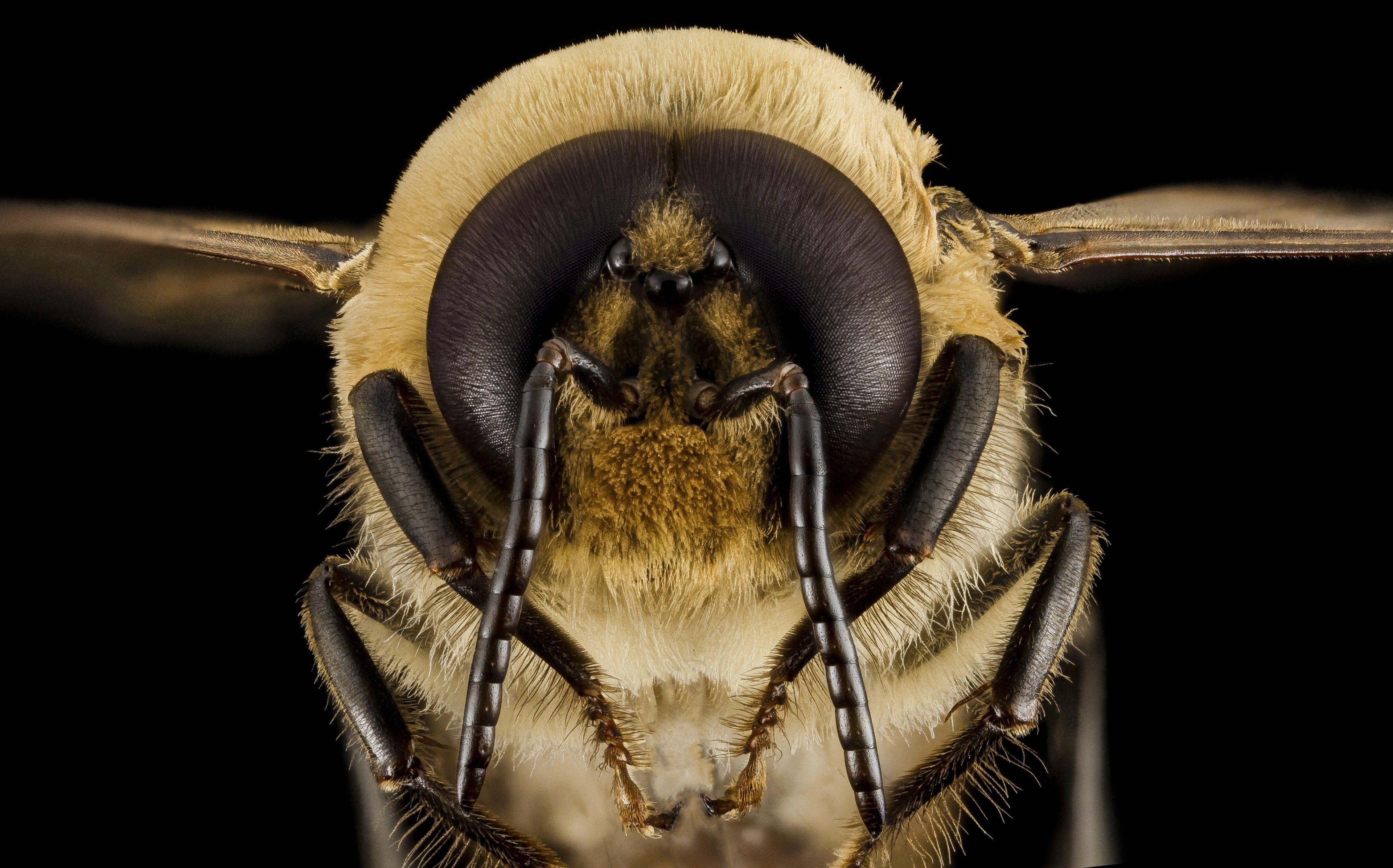 3840x2394 bee 4k desktop wallpaper hd quality (met