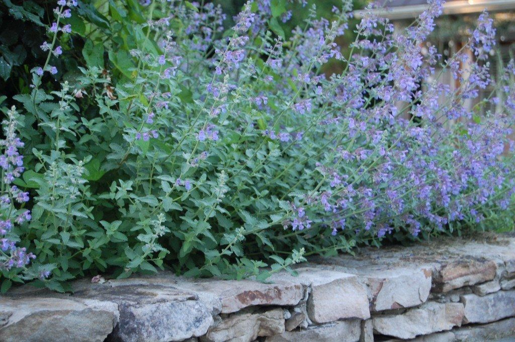 Garden chores, Plants