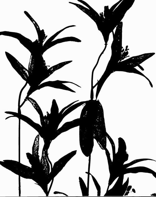 Paige Alexandra Eager Paige Eager, Flowers inverte