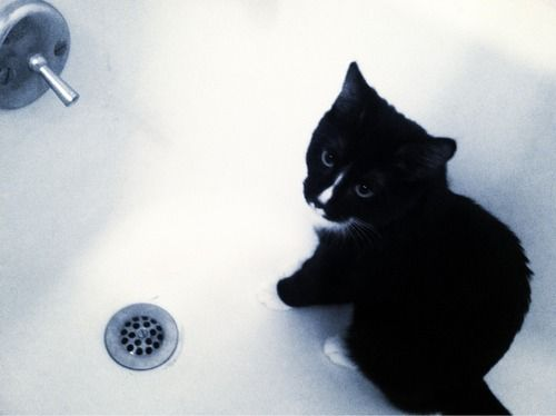 Took a filtered pic of my cat in the tub. What do you guys think?