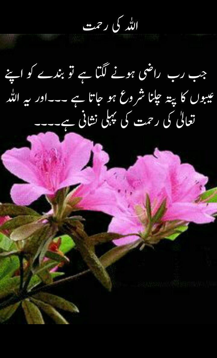 Pin By Sana Shahid On Urdu Quotes Islamic Quotes Urdu Quotes Beautiful Nature