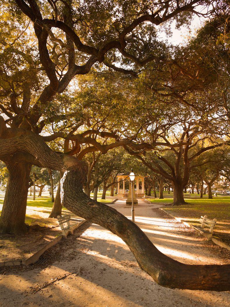 Oaks at White Point gardens, Charleston, SC, USA   Nature ...