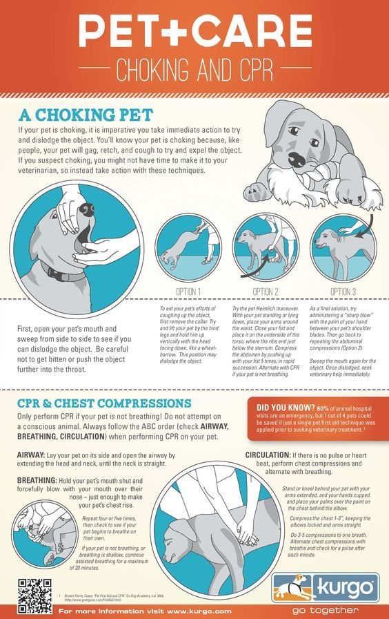 Be Prepared Pet Choking And Cpr Infographic Wag The Dog Uk Dog Care Pet Care Your Pet