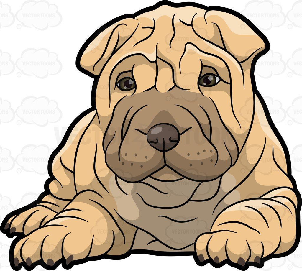 Popular Shar Pei Chubby Adorable Dog - 76ce4e5c58793abae14a946136ab5c9f  Best Photo Reference_75959  .jpg