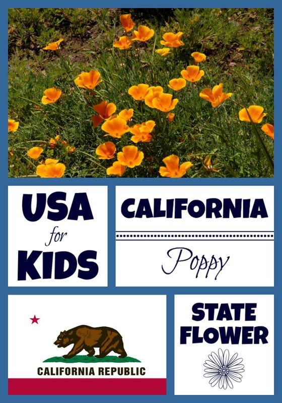 California State Flower - California Poppy by   Pinterest   Usa ...